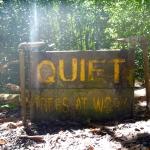 Shhh, trees don't like noise it appears
